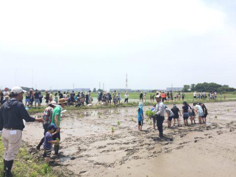 区画オーナー農業体験「田植え」イベント 大盛況に開催されました