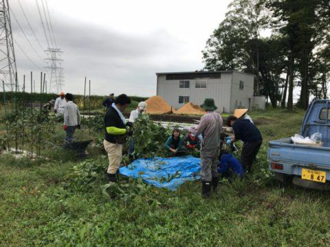 2018年10月20日の自然栽培について