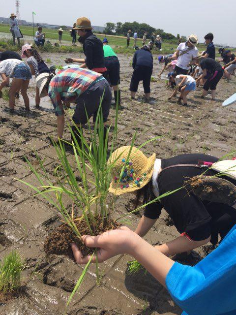 生きた大地に生命を植えよう!区画オーナー農業体験「田植え」イベント開催日決定