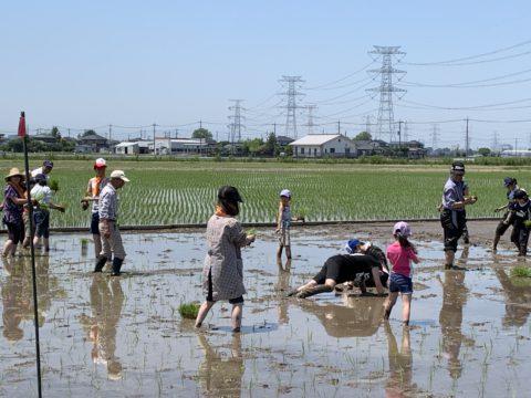 農業体験田植えイベントが開催されました【5/19・5/25】