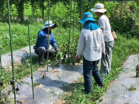 8月17日の自然栽培の会について
