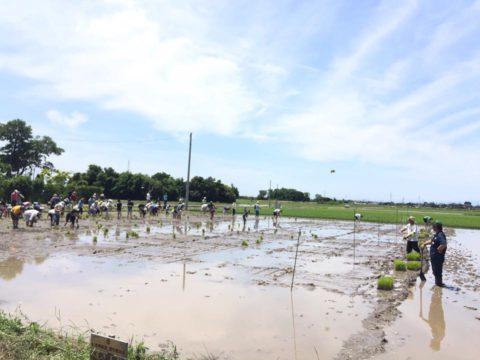 区画オーナー募集と農業体験【田植えイベント】日程のお知らせ