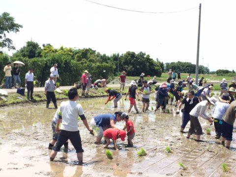5/19(土)田植えイベントは開催予定です