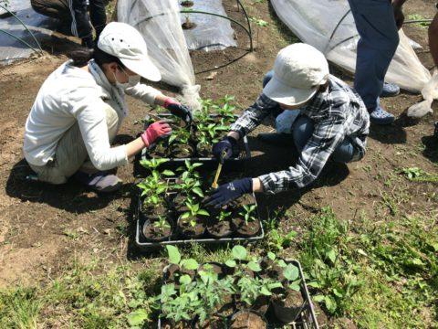 7月6日の自然栽培の会について