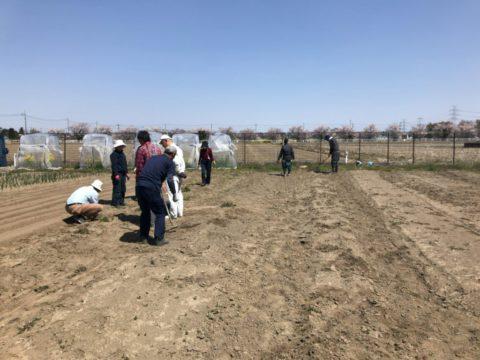 2019年4月20日の自然栽培について