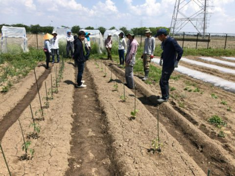 2019年5月18日の自然栽培について