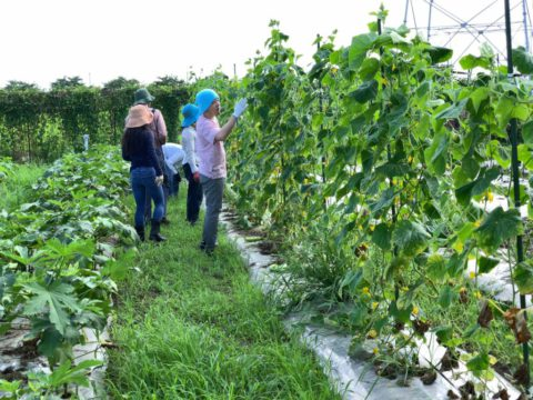 8月3日の自然栽培の会について