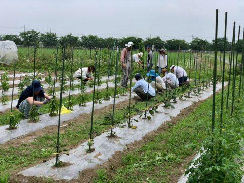 6月20日の自然栽培の会について