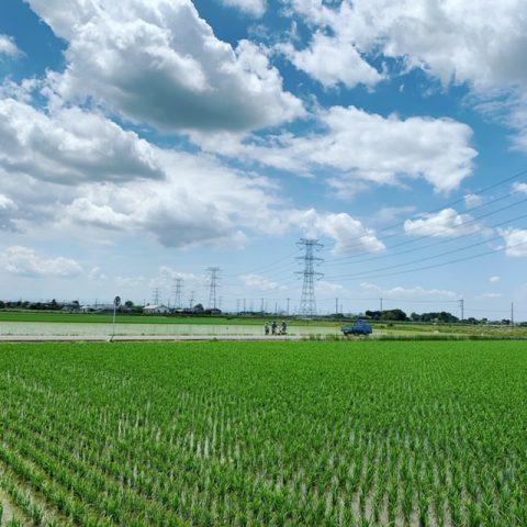 夏の農業体験中止のお知らせ