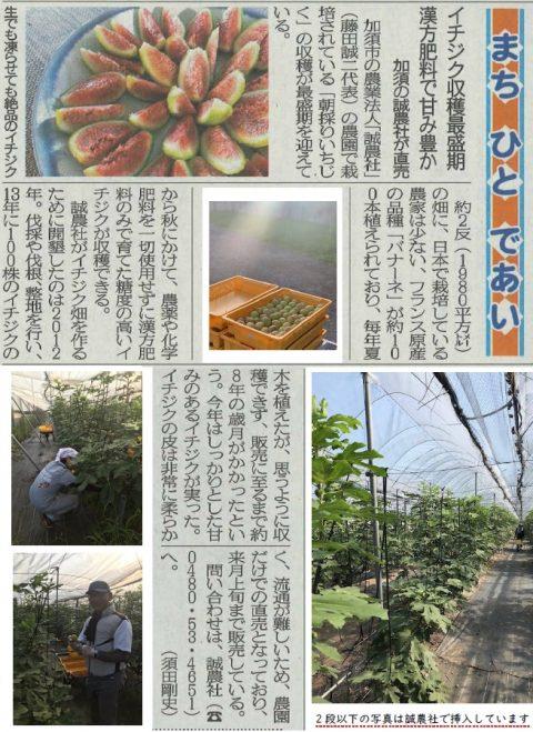 9/26埼玉新聞にて白いちじくをご紹介頂きました!