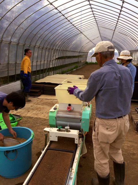 漢方農法用の種まき