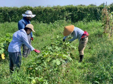 8月15日の自然栽培の会について