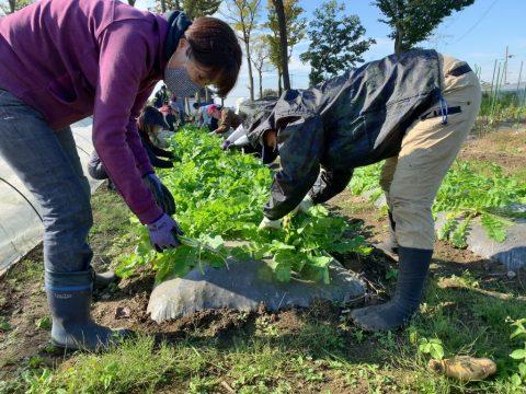 11月21日の自然栽培の会について