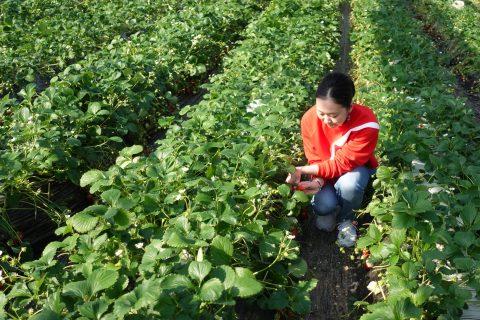 近隣の農園紹介「むさしの園並木」@久喜~いちご狩り、ぶどう狩り~