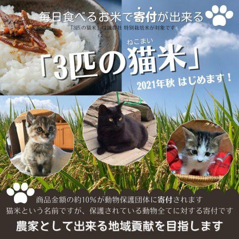 毎日食べるお米で動物保護団体に寄付が出来る「3匹の猫米」活動を始めます