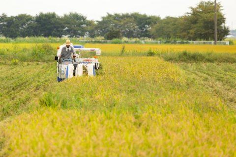 秋の農園は田んぼが主役。美味しい新米と、田んぼドローンが楽しめます。