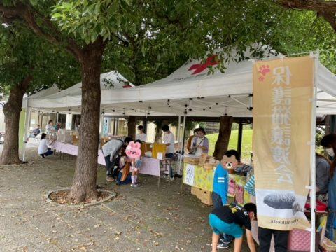 三匹の猫米活動報告/里親会(蓮田市役所敷地内開催)に行ってきました